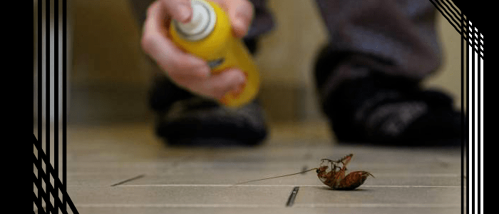 Professional Cockroach Control Evatt