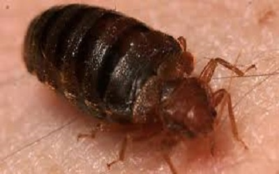 Bed Bug Control Evatt