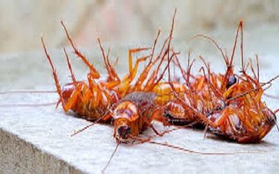 Cockroach Control Evat