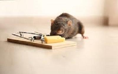 Rodent Control Evatt