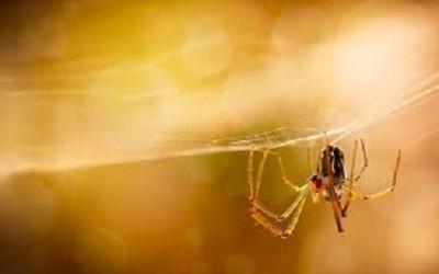 Spider Control Evatt